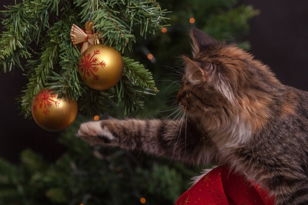 pet proof your home for holidays